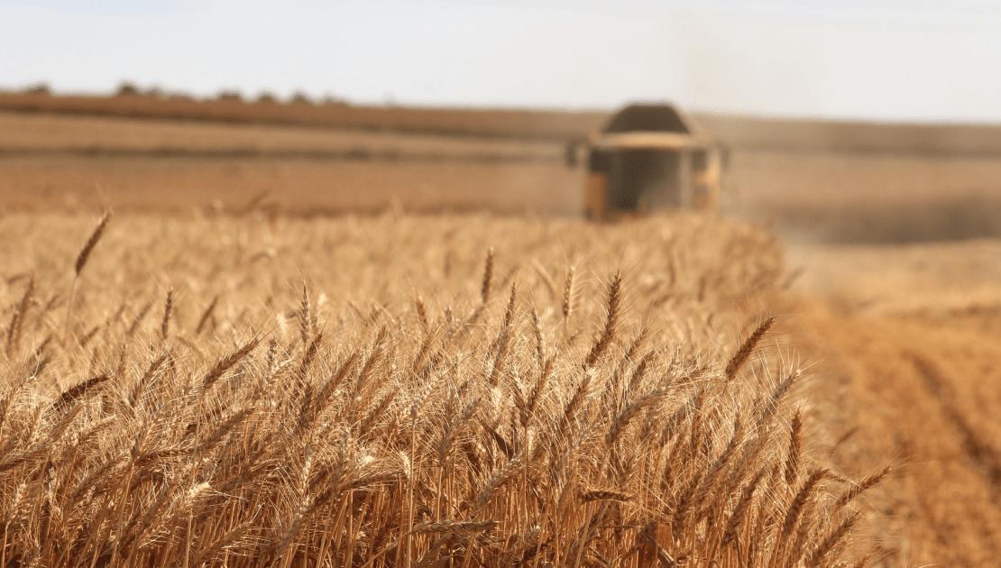 agribusiness-fraud
