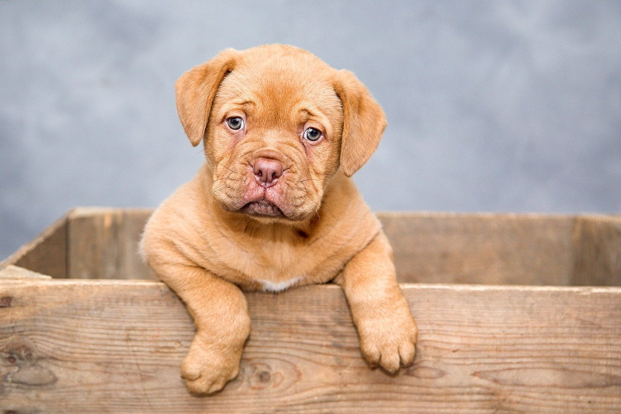 Online scam uses cute puppy photos like this one